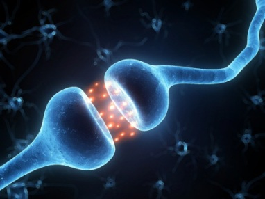Brain Receptors